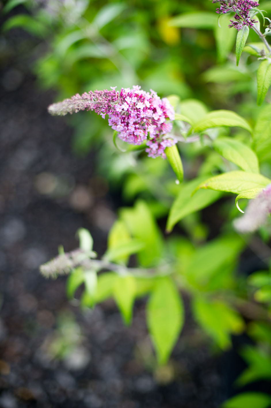 Butterfly Bush Pink Charm For Sale In Boulder Colorado
