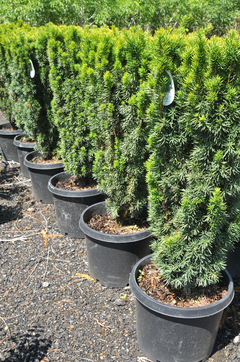 Yew Citation For Sale In Boulder Colorado